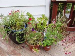 Lowes plants 002